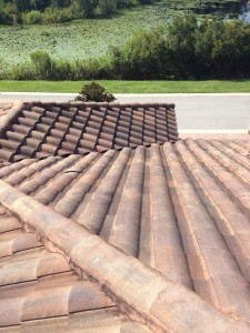 Another dirty tile roof
